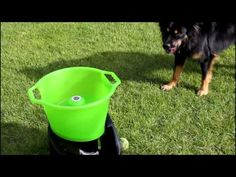 Automatic dog ball throwing gadget