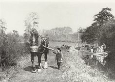 Horse towing loaded narrowboats along the Grand Junction Canal  Description…