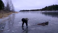 A Moose was about to drown but what these folks did was amazing...Faith in humanity, restored!!!