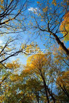 view of autumn trees. - View of autumn trees against clear sky.