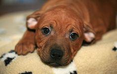 900 Ideas De Cachorros Perros Mascotas Cachorros
