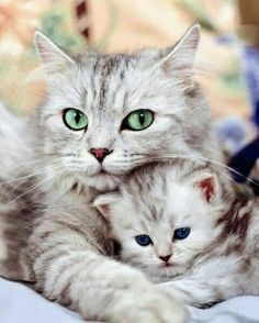 @AppLetstag #cat #kitty #kitten #cats #meow #猫 #ねこ #pet #animal #blackcat #pets #ilovemycat #catlovers