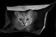 Black and White Cats - Bing Images