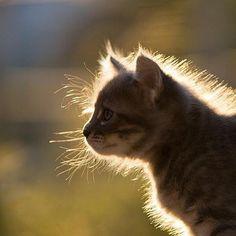 #Cats  #Cat  #Kittens  #Kitten  #Kitty  #Pets  #Pet  #Meow  #Moe  #CuteCats  #CuteCat #CuteKittens #CuteKitten #MeowMoe      #CuteCats...   https://www.meowmoe.com/32242/