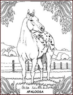 horses_36 Adult coloring pages