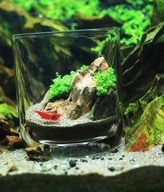 """pico aquascape [Part of a thread breaking down different """"types"""" of scapes. While not all are clearly defined and accepted in the planted aquarium circles it's some serious food for thought] Also - this is the best cheat I've seen for pico set ups! No worries about evaporation and fertilization for this one eh?"""