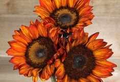 Risultati immagini per sunflower stalks Cut Flowers, Paper Flowers, Black Eyed Susan Flower, Sunflower Room, Orange Sunflowers, Autumn Inspiration, Body Art, Fall, Plants