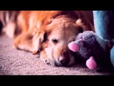 And God Made a Dog (VIDEO) » DogHeirs | Where Dogs Are Family
