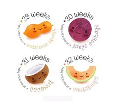 Items similar to Pregnancy Stickers - Belly Stickers - Baby Bump Weekly Stickers - Maternity photo prop - Scrap book pregnancy - Pregnancy Reveal on Etsy 28 Weeks Pregnant Belly, Baby Weeks, Maternity Photo Props, Baby Stickers, Bun In The Oven, Pregnancy Photos, Pregnancy Belly, Baby Bumps, Baby Month By Month
