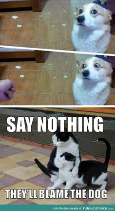 20 Super Funny Animal Memes Funny animals have always been an internet sensation. They've got what it takes to make us laugh, especially when they're turned into memes. Here are our collection of the most funny moments of animals of the internet. Funny Animal Jokes, Funny Dog Memes, Really Funny Memes, Cute Funny Animals, Funny Animal Pictures, Cute Baby Animals, Funny Dogs, Memes Humor, True Memes