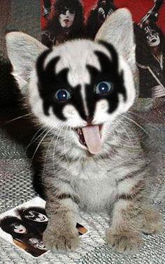 Kiss Kat