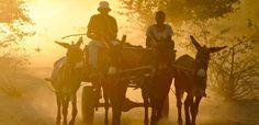 Só onthou ek Suid-Afrika: Donkiekar tydens sonsondergang in die Karoo