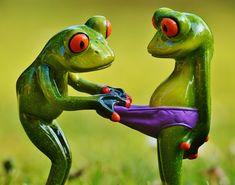 картинки лягушек: 24 тыс изображений найдено в Яндекс.Картинках