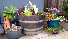 Repurposed wine barrel - Susan's Garden Susan's Flower Susan's garden, succulents, hanging flowers, flower, arrangement, murphyfrog, repurpose, container gardening, succulent garden, colorful bloom