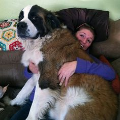 12 Struggles of Owning a Big Dog That Doesn't Realize He's a Big Dog