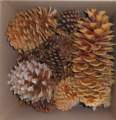 How to Bake Pinecones | Refresh Restyle