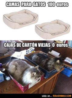 Camas para gatos.