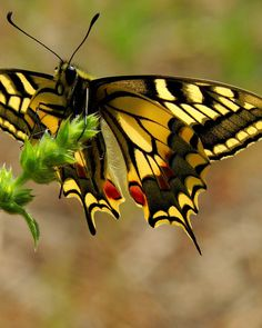 Butterfly photograph, 30 the most beautiful butterflies