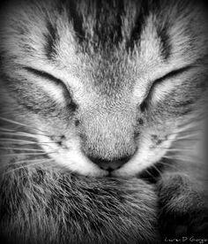 Soft kitty warm kitty little ball of fur, happy kitty sleepy kitty pur pur pur. by Jennifavela