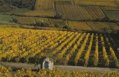 Vignoble du Layon © D.Drouet-CDTA