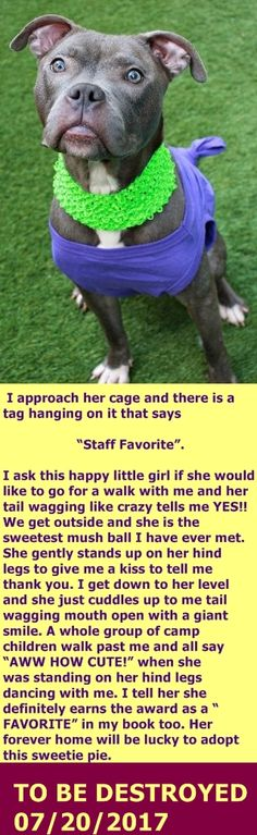 SAFE 7-20-2017 by Looking Glass Animal Rescue --- Manhattan Center  My name is CASTINE. My Animal ID # is A1118153. I am a female brown am pit bull ter mix. The shelter thinks I am about 4 YEARS old.  I came in the shelter as a STRAY on 07/11/2017 from NY 10027, owner surrender reason stated was STRAY.  http://nycdogs.urgentpodr.org/castine-a1118153/