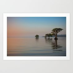 Pure Florida Art Print by RachelleVance - $20.00