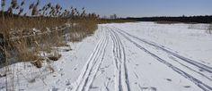 Puszcza Białowieska: Pożegnanie z nartami
