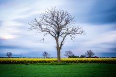Lonely Tree by Mathias Stjernfelt on 500px Lonely, Country Roads, Feeling Alone