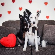 Happy Valentines Day ❤️ Photo by: @kelly_bove #AnimalAddicts and follow us to be featured!