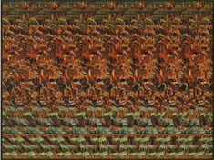 Avez vous vu les lions en 3D dans cette image ? Louchez et petit à petit vous allez entrer dans une nouvelle dimension.