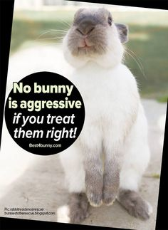 Bunnies are naturally sweet natured & only aggressive towards you if they have reason to be! www.best4bunny.com