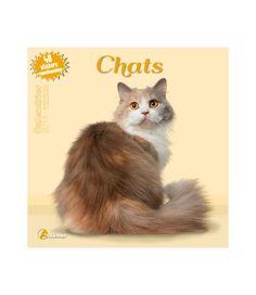 Chat Web, Cat Calendar, Fiction, Fox, Cats, Movies, Movie Posters, Animals, Calendar
