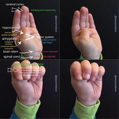 Tantrums? Neuroscience, emotions, and behavior. Flipping your lid and the Hand Model of the Brain by Dr. Dan Siegel