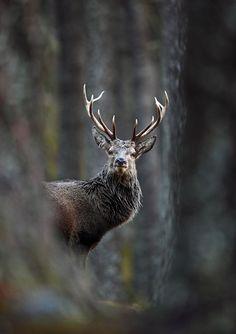Taken in the Scottish Highlands. Photos Of British Wildlife