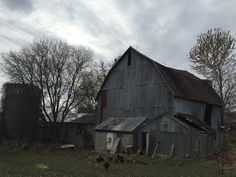 Old barn. Dayton, MN