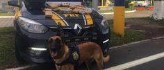 InfoNavWeb                       Informação, Notícias,Videos, Diversão, Games e Tecnologia.  : Cão da polícia encontra 6,5kg de maconha dentro de...