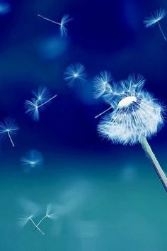 Dandelion because I like to kick them and watch the seeds fly away :) it makes me happy.