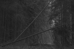 Hardwood, Texture, Photography, Beautiful, Surface Finish, Natural Wood, Photograph, Fotografie, Photoshoot