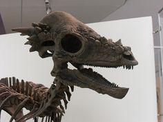 Pachy Skull | Flickr - Photo Sharing! - Pachycephalosaurus.