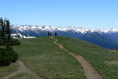 The view from Hurricane Ridge Trail overlooking the Olympic Mountains, Olympic National Park, Washington State - Washington Trails | AllTrails.com