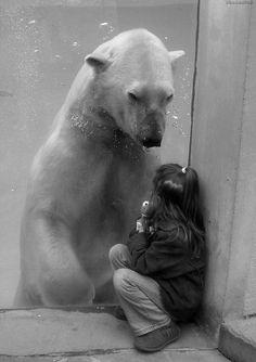 Innocence. #polar bear #animals #photography #love #white #black and white #bears #cute #sweet #zoo #friends