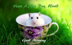 good morning image (2)