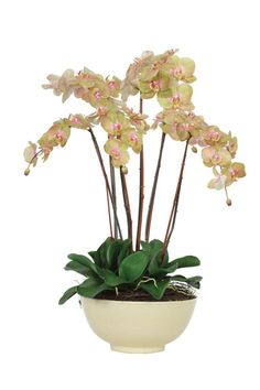 Faux Orchid Flower Arrangement in Ceramic Bowl. Free Shipping Orchid Flower Arrangements, Bathroom Colors, Faux Flowers, Ikebana, Ceramic Bowls, Orchids, Beautiful Flowers, Modern Design, Planter Pots