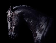 www.pegasebuzz.com | Equestrian photography : Romain Menke for Milstein Stables
