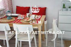 geko #cat #cats #kitty #breakfast