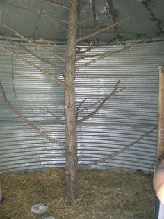 Grain bin to chicken coop... Spring project!!