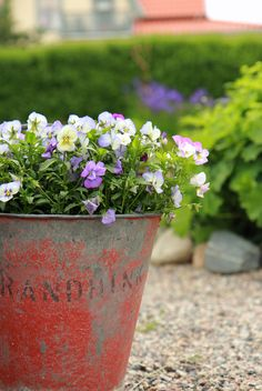 Flowers in an old bucket... don't need to be harder than that!