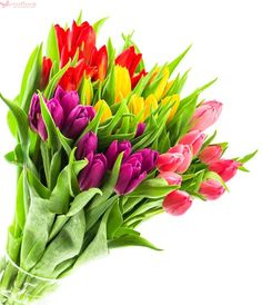 Bouquet of fresh multicolor tulips isolated on white background. Top view See more nature objects isolated on white background in my collection Tulips In Vase, Purple Tulips, Tulips Flowers, Cut Flowers, Spring Flower Bouquet, Spring Flowers, Flower Close Up, Flower Pictures, Flower Power