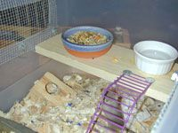 1000 images about hamster on pinterest hamsters for Hamster bin cage tutorial