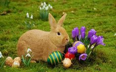 Easter Bunny Images : Today here we are going to share some best Free Easter Images and Easter Pics 2016 with you. The Easter festival 2016 is on March Real Easter Bunny, Easter Bunny Pictures, Easter Bunny Eggs, Bunny Bunny, Bunny Rabbits, Funny Easter Pictures, Happy Easter Photos, Easter Funny, Easter Messages